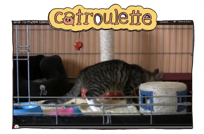 Catroulette